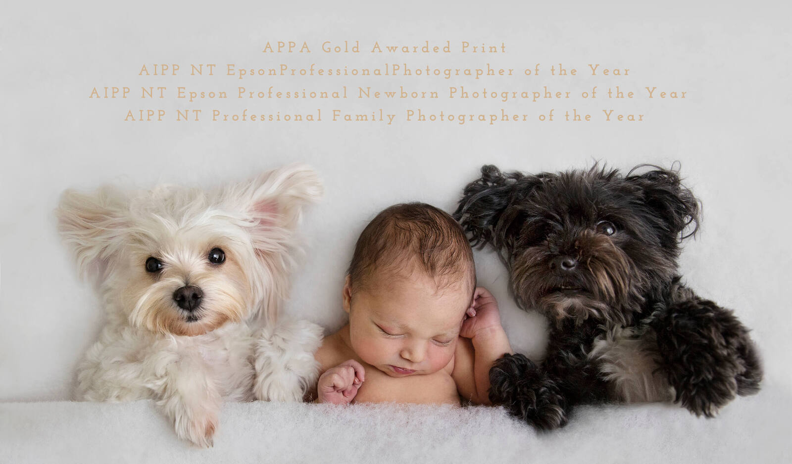 Newborn with puppies Photographers Little Cherub Photography Darwin